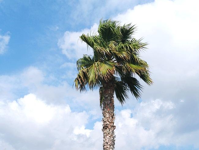 Paros island palms