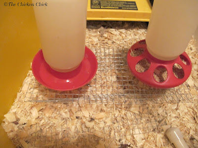 Hardware cloth riser helps keep pine shavings out of the water.