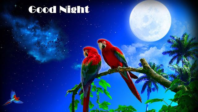 good night wishes whatsapp images, good night wishes ,good night, good night video, good night images, good night whatsapp status,good night whatsapp video, good night videos for whatsapp, good night wishes video, good night status, good night quotes, good night gif, good night whatsapp images, good night whatsapp message, good night video whatsapp, good night whatsapp, good night video message, good night sms, good night video download for whatsapp, good night images for whatsapp in hindi, good night images for whatsapp free download, good night image hd, good night image download, good night images with love, good night images hd free download, good night images free download for mobile, good night whatsapp pictures.