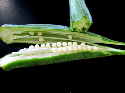 10 Health Benefit of Okra Consumption