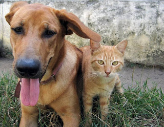 20 natural home remedies for pets