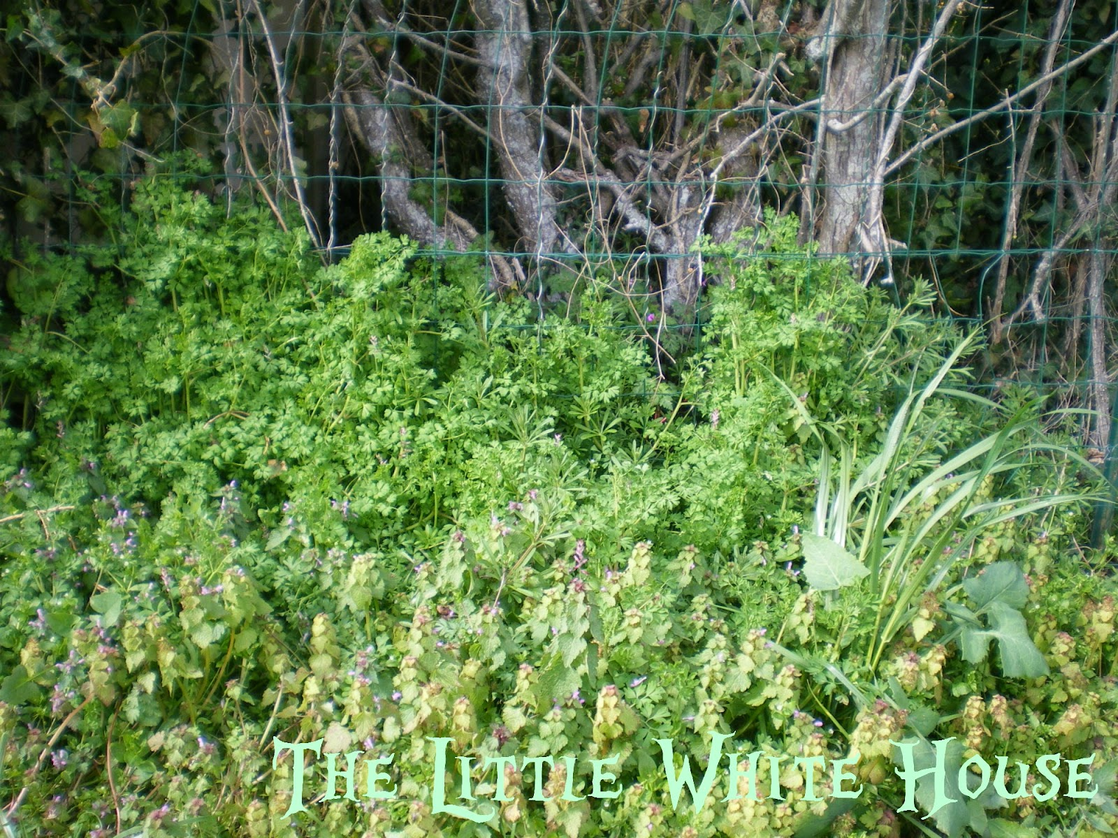 The Little White House On The Seaside: Strawberry (Petite ...