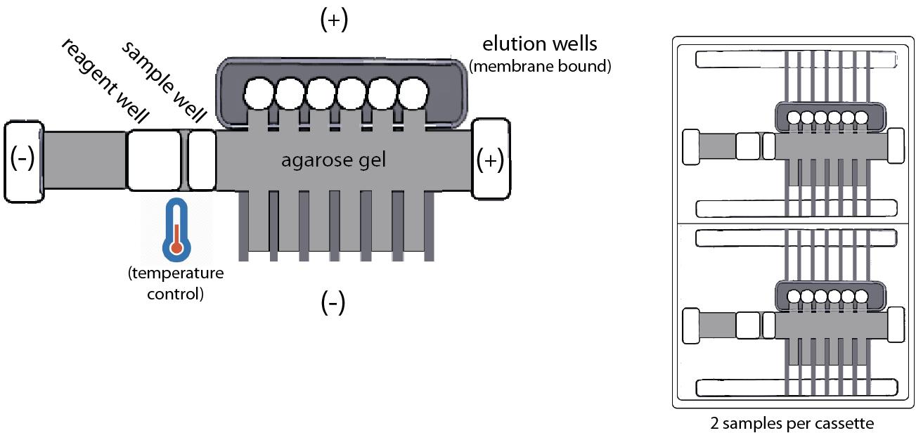Omics! Omics!: SageHLS: Automated uHMW DNA Preparation