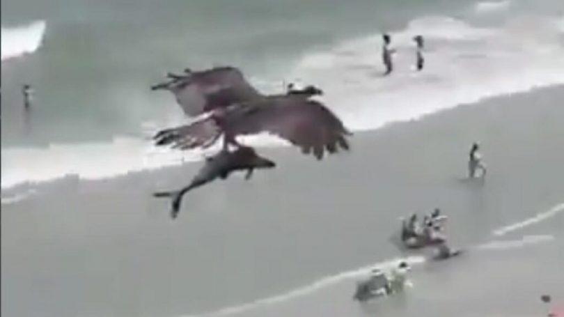 Καταπληκτικό βίντεο: ο αετός πιάνει έναν καρχαρία στις ακτές της Φλόριντα.