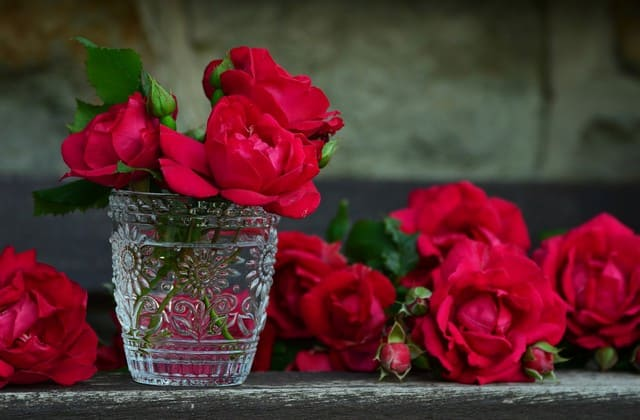 Sejarah bunga mawar