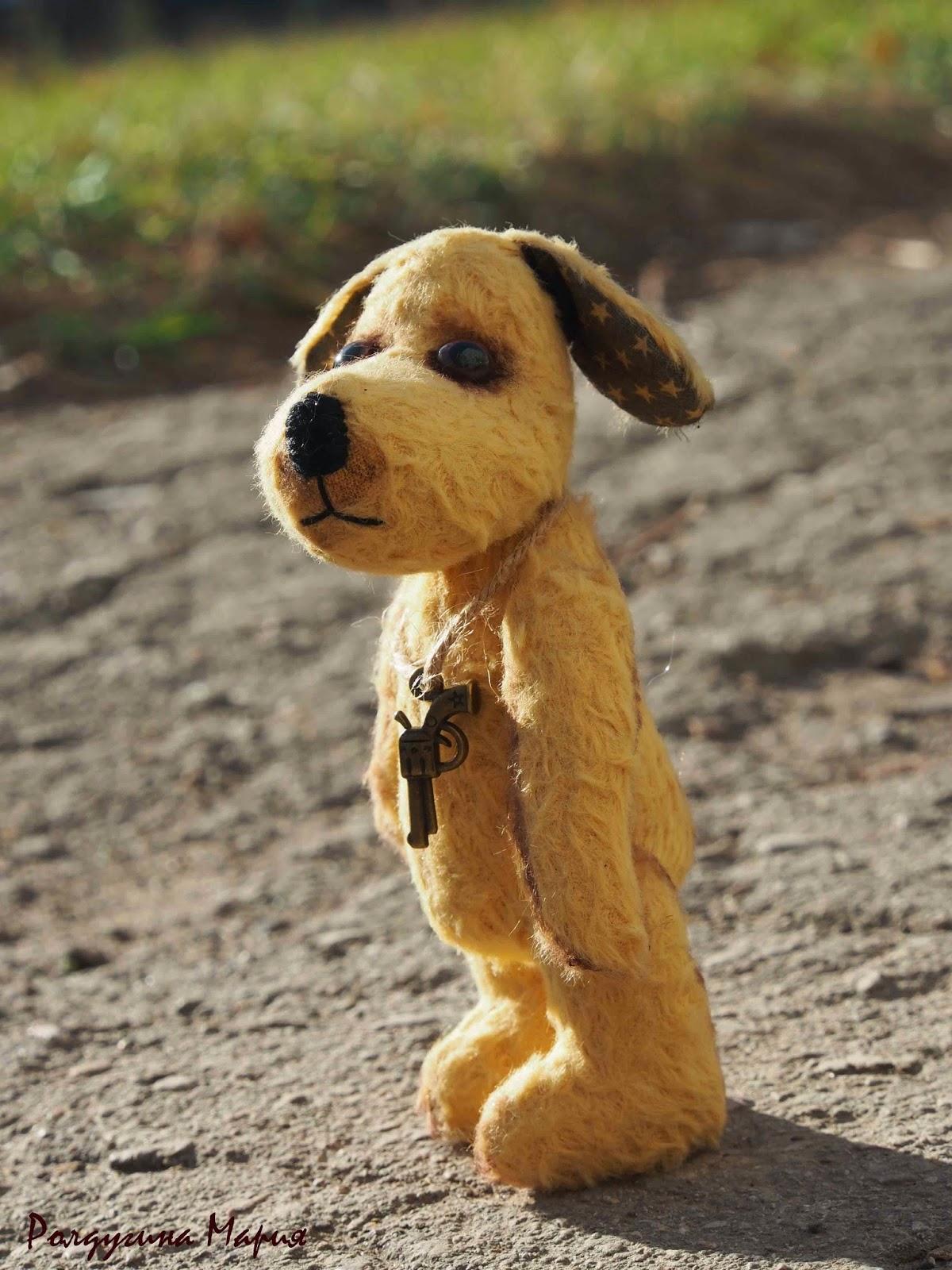 собака на солнце