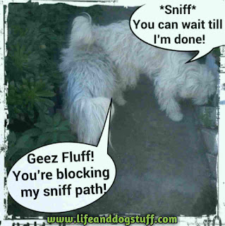 Buffy and Fluffy dogs sniffing in garden