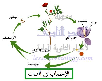 الإخصاب فى النبات