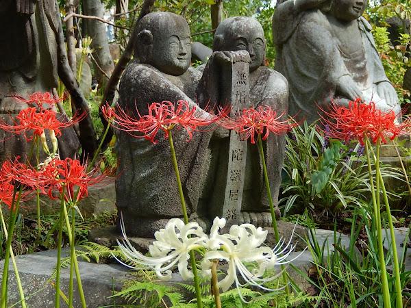 常泉寺のヒガンバナ
