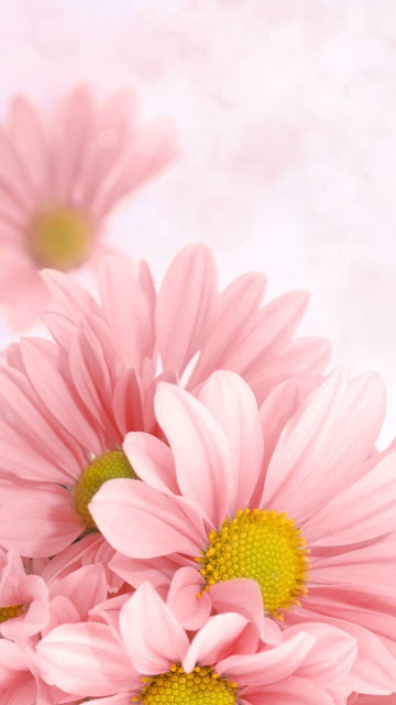 """""""Say đắm"""" bộ hình nền điện thoại cánh hoa tuyệt đẹp"""