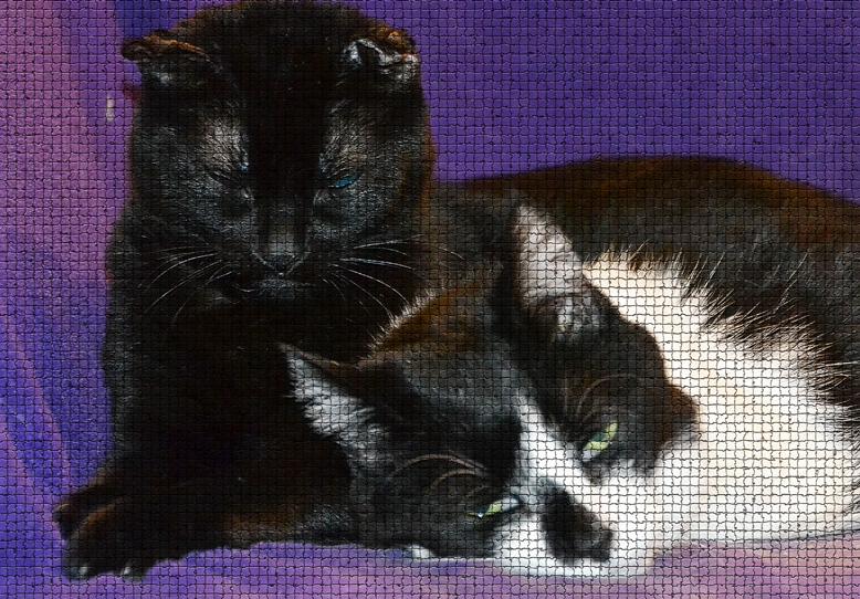 Multiple cat households
