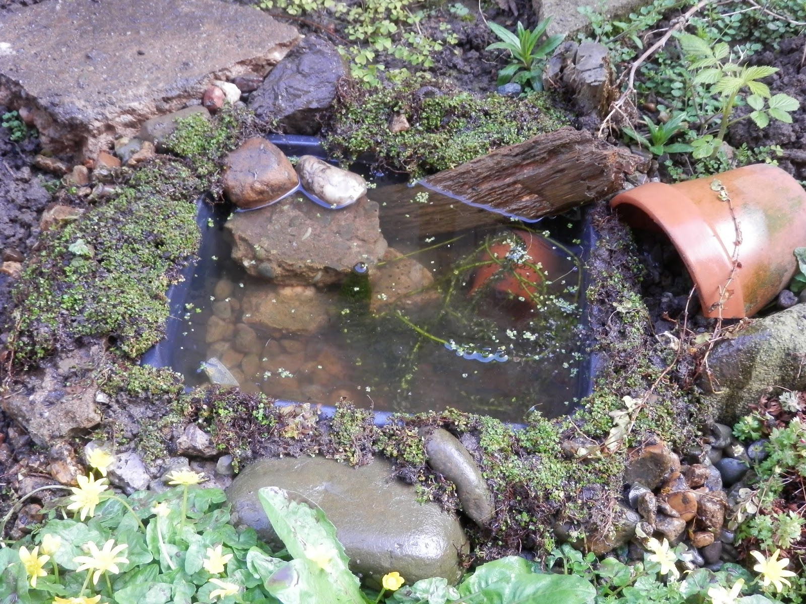 second hand susie  how i made my washing up bowl pond