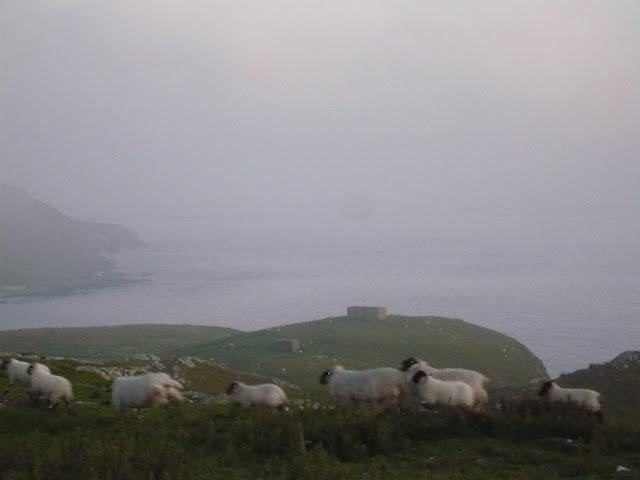 ovce na hmlistom útese