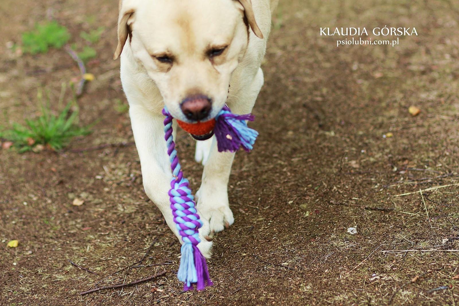 Jouet Dental Ball corde, psiolubni, zolux, naszezoo, zabawki dla psa, wytrzymałe zabawki, szarpak, piłka tpr, piłka z kauczuku dla psa, najlepsza piłka świata, labrador retriever, psy rasowe, labrador biszkoptowy,