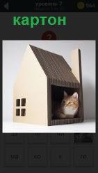 кошка сидит в картонном домике, сделанный для неё