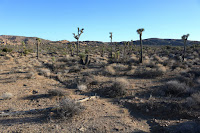 View southeast across open desert toward the Pine City Backcountry Board parking area, Joshua Tree National Park