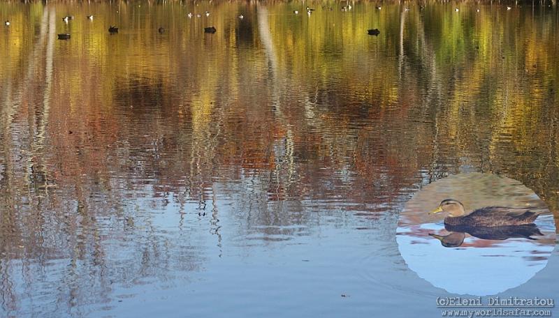 Αντανακλάσεις σε λιμνούλα του Long Island