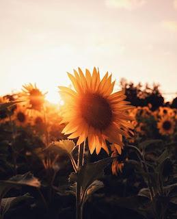 Słoneczna roślina
