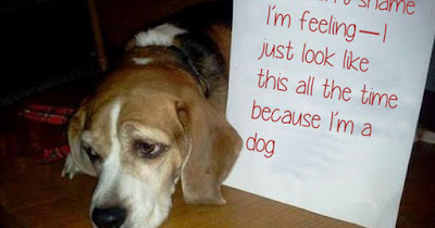 ''Dog Shaming Photos'' I Am Feeling Just Like This