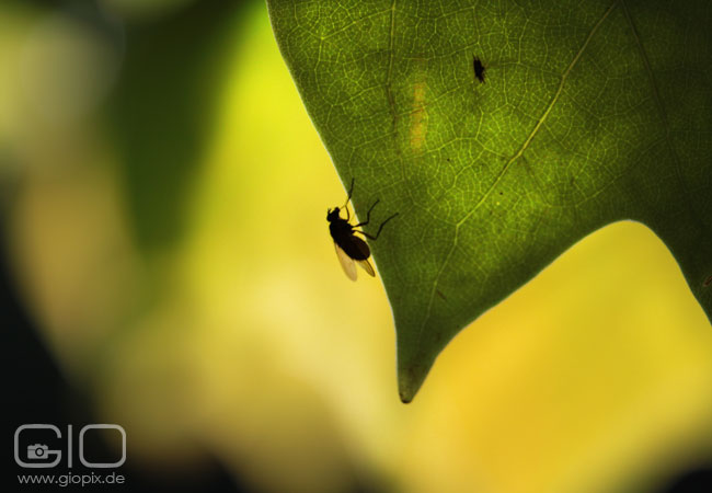 Photo: Fly on leaf