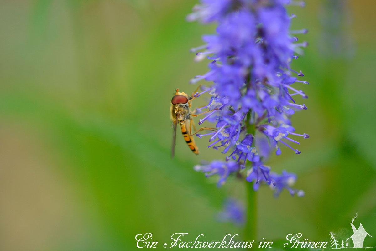 Insekten, Makroaufnahmen, Gartenblog