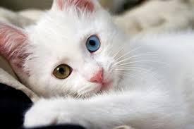 mengenal sifat dan karakter kucing dari gerak mata