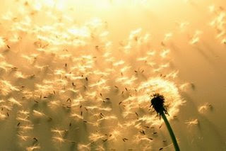 Resultado de imagem para Flores ao Ventos