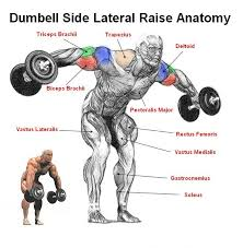 Lift Dumbbells Bend Over At The Waist With Your Feet Shoulder Width Apart Keep Knees Bent To Prevent Hurting Lower Back