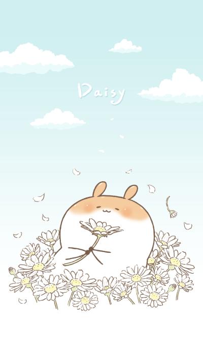 Chubby Rabbit-Daisy