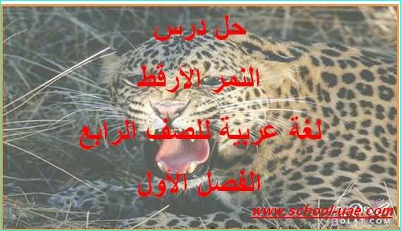 حل درس النمر الأرقط لغة عربية للصف الرابع الفصل  الاول 2020- مدرسة الامارات