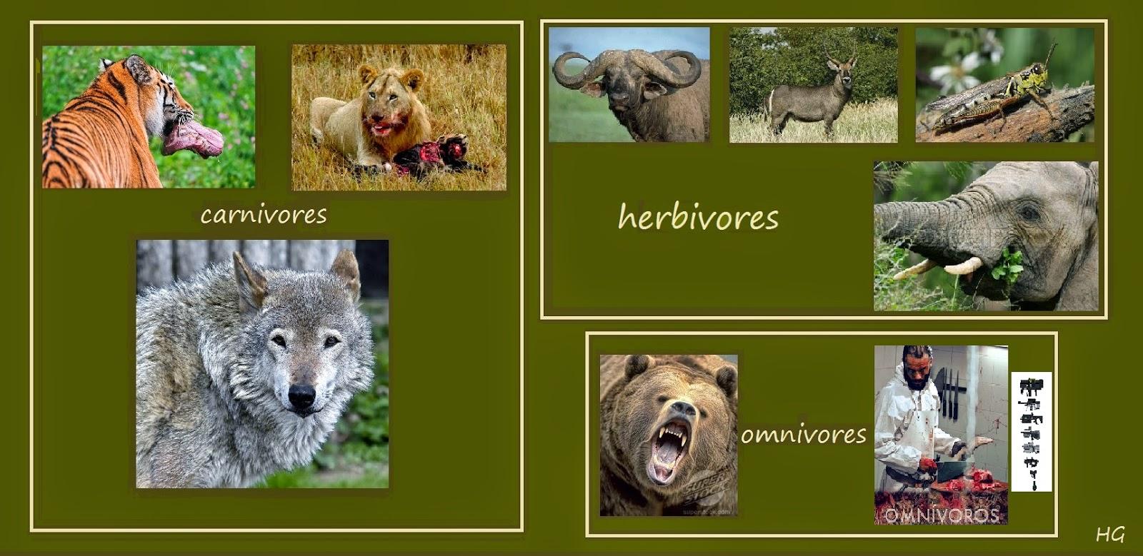 The Patient Ox Carnivores Gt Herbivores