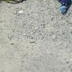 Omg! See corpse of 3 yr old boy with his pen!s cut off abandoned in Gwagwalada, Abuja