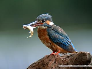 Galleri Foto Burung