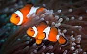 Filosofi Ikan Air Laut - Kisah Inspirasi