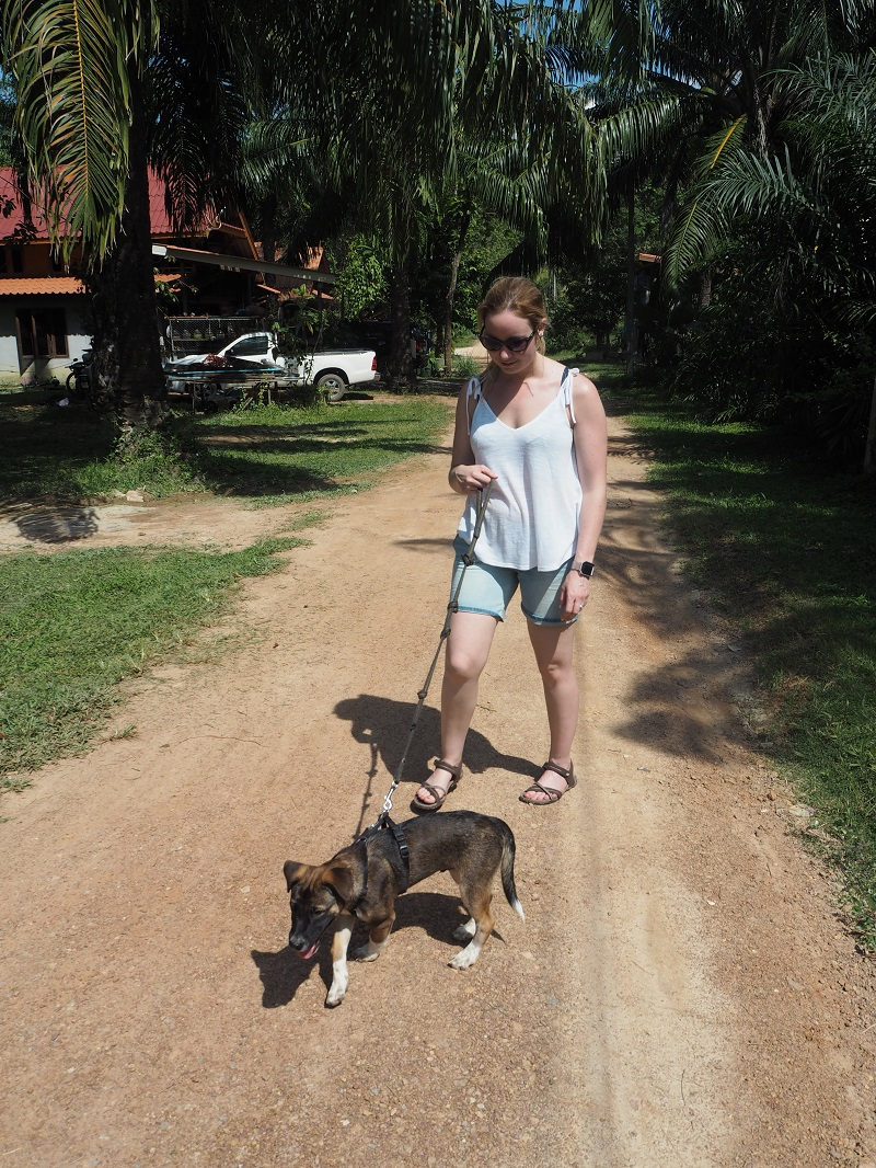 Walking puppy Ron at Lanta Animal Welfare