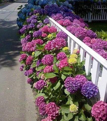 Benefits of living fences 1
