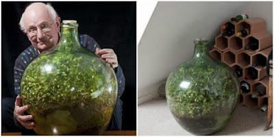 David Latimer creó su propio jardín en una botella
