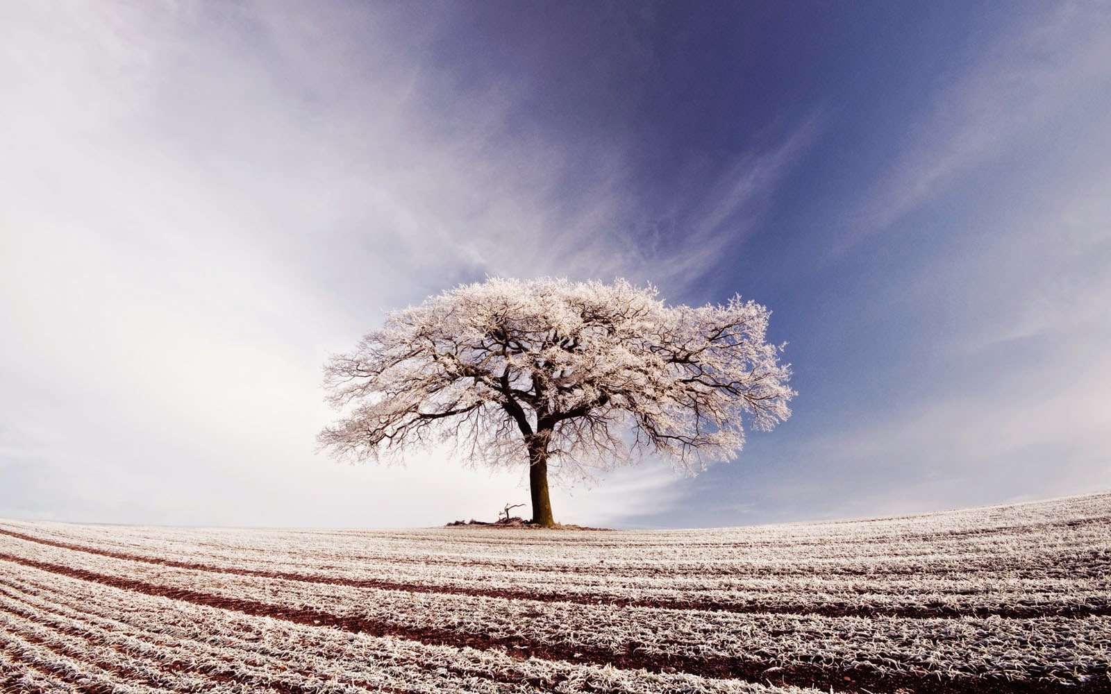 wallpapers: Lonely Tree Wallpapers
