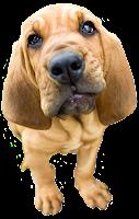 Cara de cachorro png