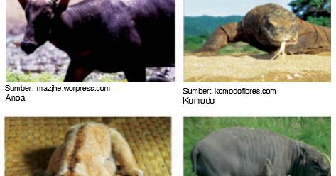 44 Gambar Hewan Tipe Australis Di Indonesia Terbaru