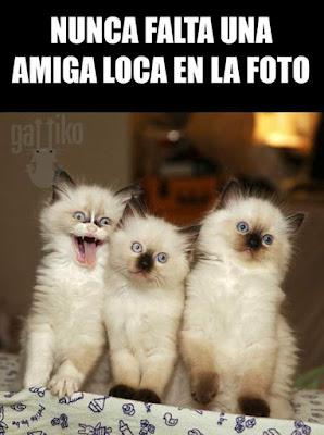 Nunca falta una amiga loca en la foto, gato, gatos