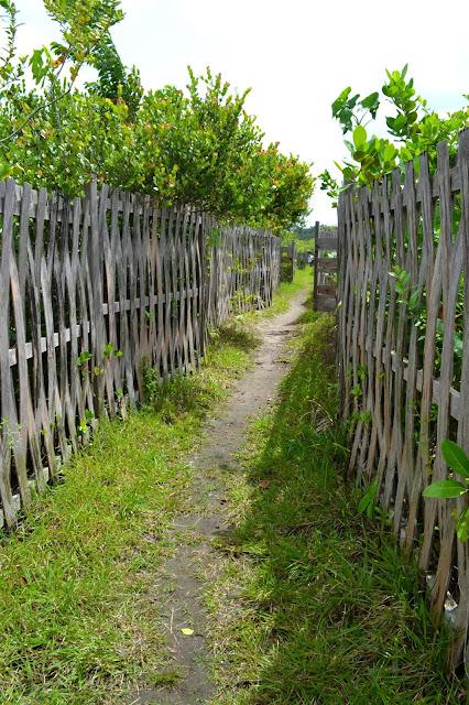 Guyane, Les pripris de yiyi, Sinnamary, Iracoubo, Kourou, observation des oiseaux, maison de la nature, faune et flore de Guyane, randonnée, parcours pédestre Guyane, conservatoire du littoral, SEPENGUY Guyane
