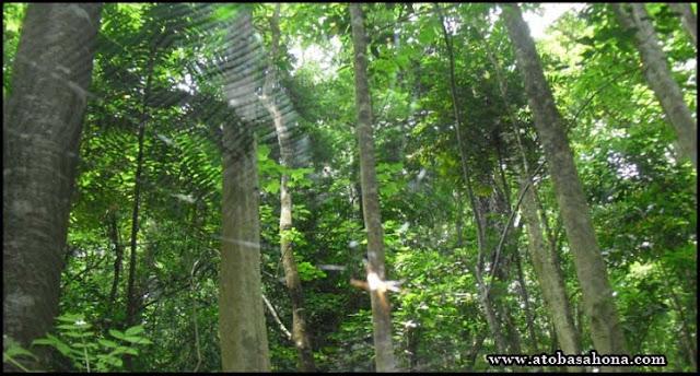 Pengertian Komposisi Jenis dan Struktur Vegetasi