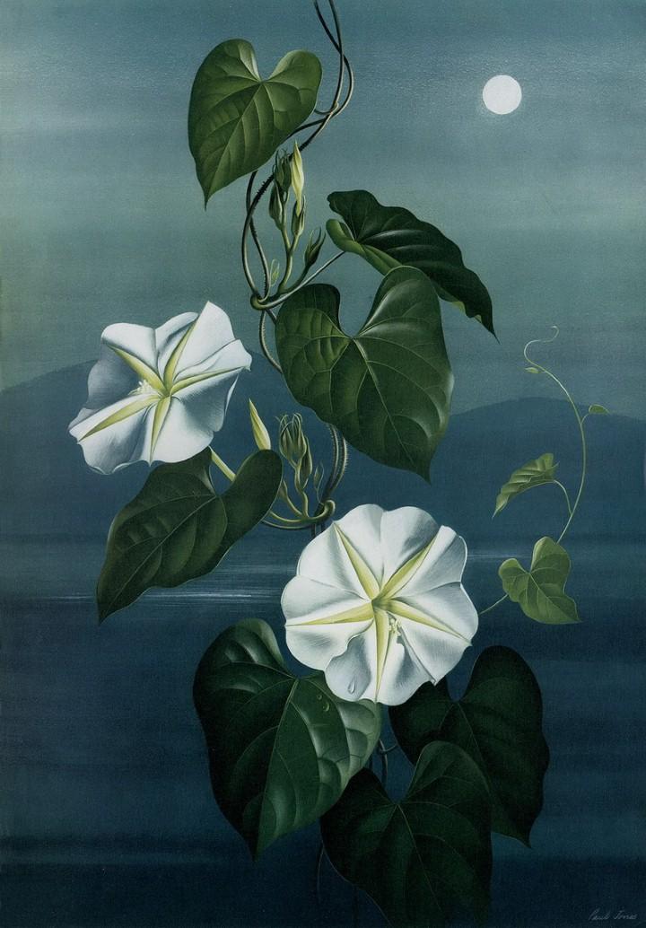Paul Jones. Акварельные рисунки цветов 37