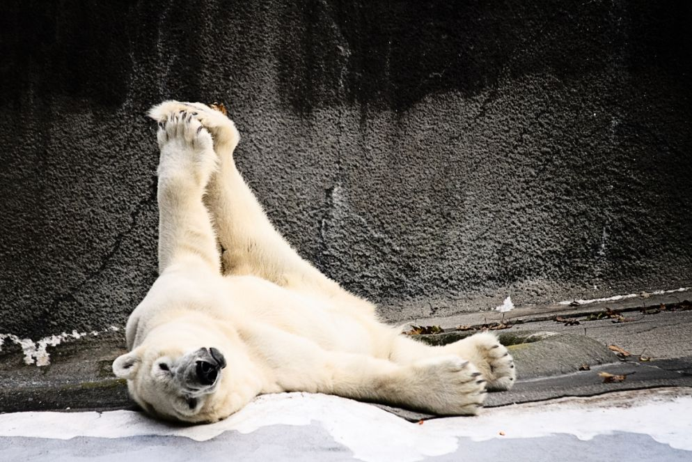 16. Yoga....The Polar Bear