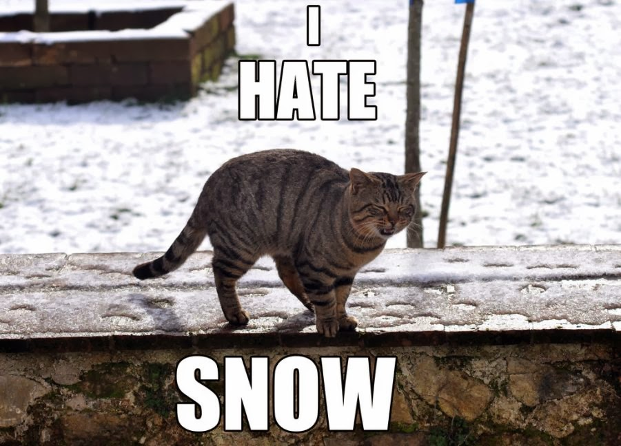 Cats Really Hate Snow