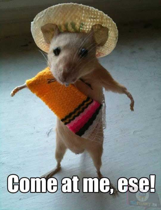Mexican sombrero mice gang is scary.