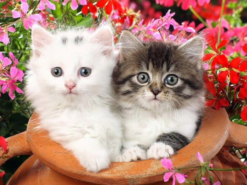 cute-baby-cat-couple