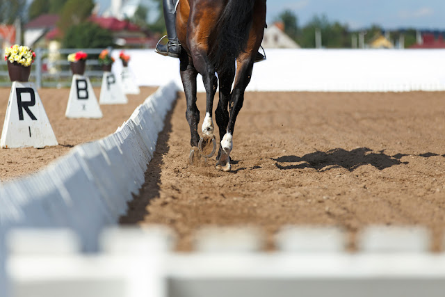 [Guest Blog] Essential Tips And Advice For Your First Dressage Show