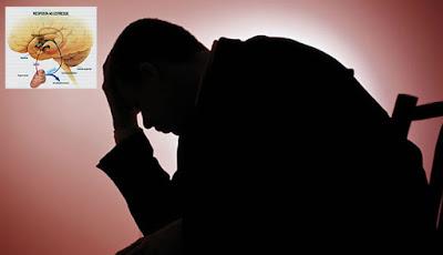 Pesquisadores do Butantan descobrem forma de controlar a liberação de hormônios do estresse
